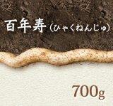 自然薯『百年寿』 (700g 級)
