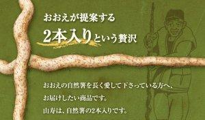 画像4: 自然薯『山寿』 (2本入り 1.1kg 級)