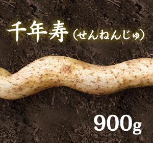 自然薯『千年寿』(900g 級)