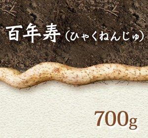画像1: 自然薯『百年寿』 (700g 級)