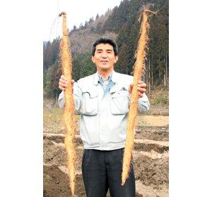 画像3: 自然薯『萬年寿』 (1.1kg 級)