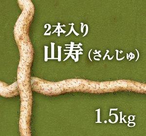 画像1: 自然薯『山寿』 (2本入り 1.5kg 級)